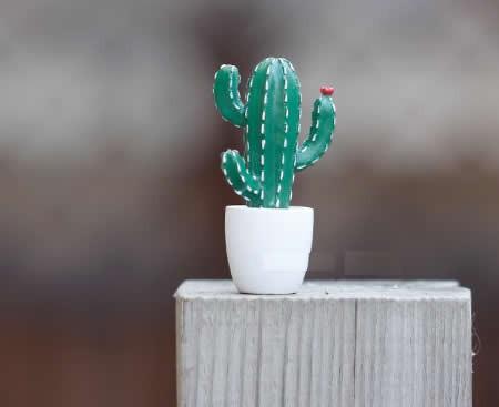 Cactus Fridge Magnets, Set of 6