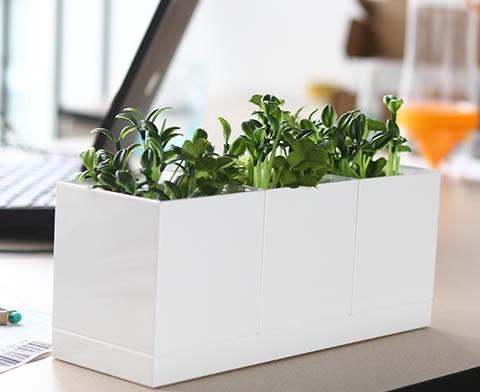 Set of 3  White Plastic Planter Set