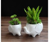 Elephant White Ceramic Succulent Planter/Plant Pot/Flower Pot,Set of 2
