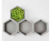 Hexagon Geometric Design Succulent Planter Pot, Gray