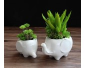 Elephant White Ceramic Succulent Planter/Plant Pot/Flower Pot,Set of 2