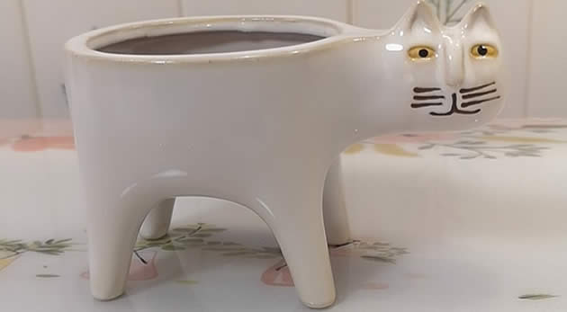 Cute Cartoon Cat Pastoral Cactus Plant Small Flower Pot