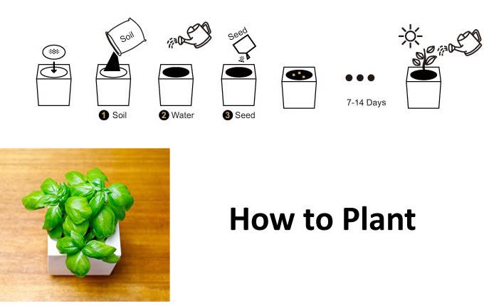 Desk Plant  Garden  Set
