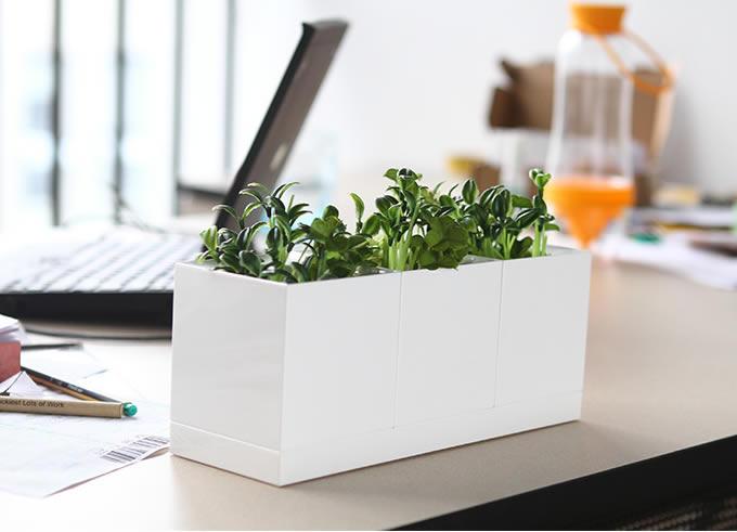 Set of 3 white plastic planter set feelgift - Cool office plants ...