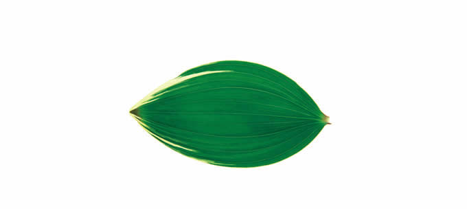 Leaf shape Soft Air Conditioning Blanket- Aspidistra Leaf